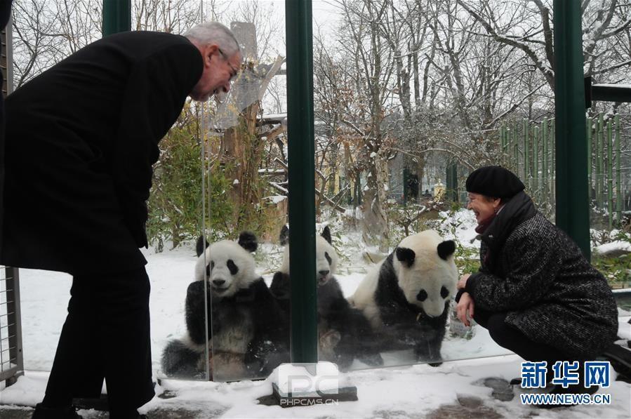 (国际)(1)奥地利出生的大熊猫龙凤胎即将返回中国
